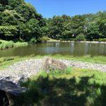 佐鳴湖公園内 ひょうたん池⓵